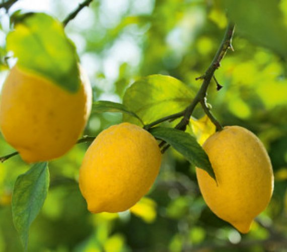 citrus-limon.jpg