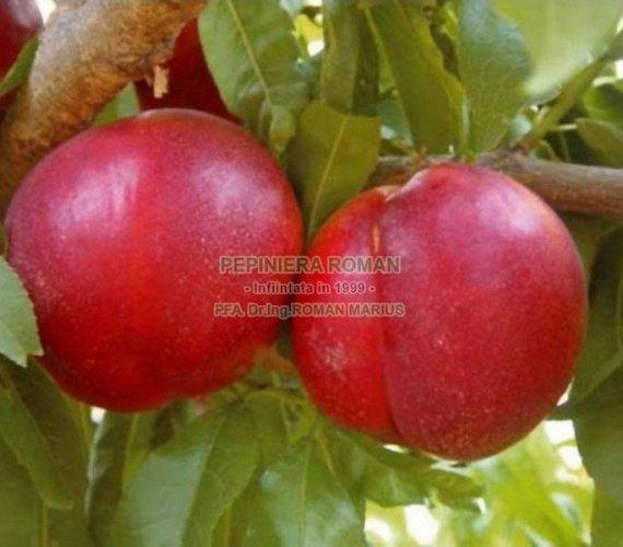 nectarin-nectared-4.jpg