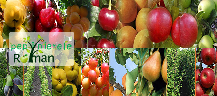 pomi fructiferi altoiti aclimatizati