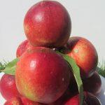 soi-nectarin-tina-1.jpg